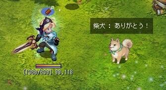 14th記念柴犬と冒険しよう!